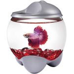 Tetra - Betta Bubble - 1,8 l alb