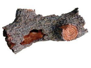 Dennerle - Nano Crusta Tree M