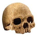 Exo Terra - Decor Primate Skull - PT2855
