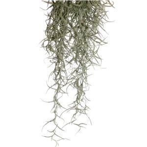 Exo Terra - Spanish Moss S / PT3090